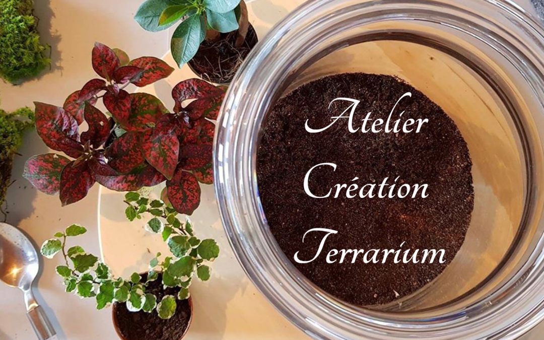 institut-precieuse-harmonie-brunstatt-atelier-creation-terrarium-ginger-et-green